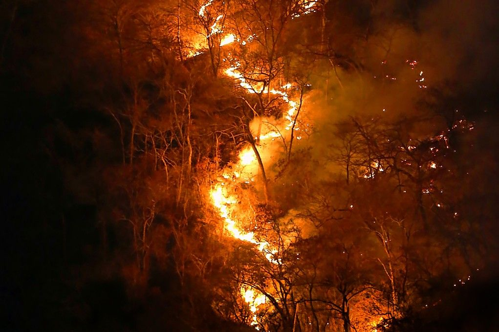 Papa dice, tras incendios forestales está corrupción
