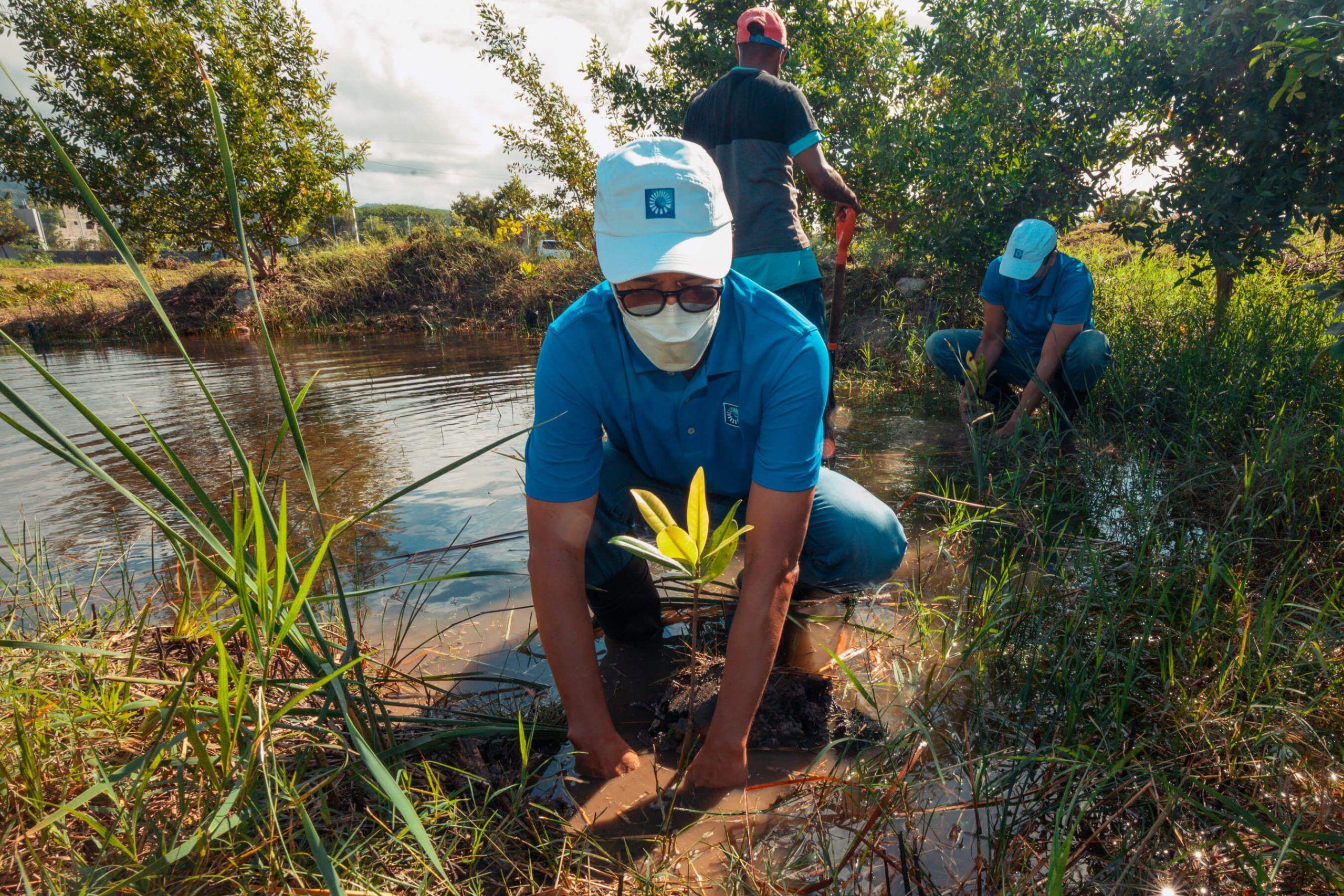 5761Los mangles sembrados enriquecerán la presencia de la fauna residente en el Jardín Botánico de Santiago.